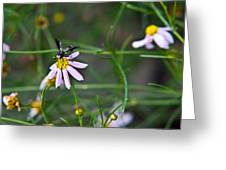 Yellow Banded Black Winged Fly 1 Greeting Card