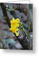 Yellow Beam Greeting Card