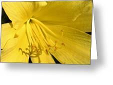Yellow Beams Greeting Card