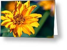 Yellow Beauty Greeting Card by Rourke
