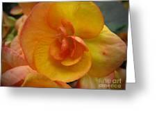 Yellow Begonia Greeting Card