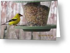 Yellow Bird Up Close Greeting Card