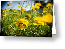 Yellow Blooming Wildflowers Greeting Card