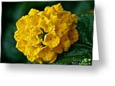 Yellow Blooms Greeting Card