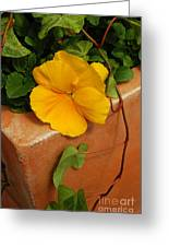 Yellow Blossom On Planter Greeting Card