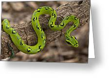 Yellow-blotched Palm Pitviper Greeting Card