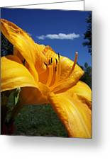 Yellow Blue Sky Lily Greeting Card
