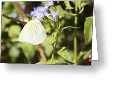Yellow Butterfly Feeding On Violet Flower Greeting Card