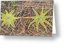 Yellow Butterwort In Habitat Greeting Card by Scott Bennett