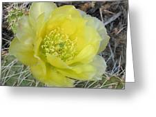 Yellow Cactus Flower Greeting Card