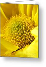 Yellow Chrysanthemum Greeting Card