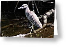 Yellow Crowned Night Heron II Greeting Card