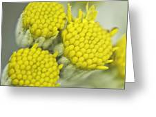 Yellow Cup Buds 1 Greeting Card