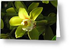 Yellow Cymbidium Greeting Card