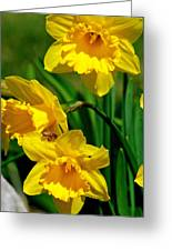 Yellow Daffodils And Honeybee Greeting Card