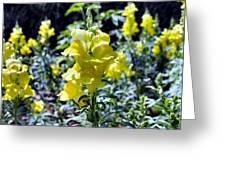 Yellow Dragons Greeting Card