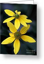 Yellow Duet Greeting Card