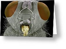 Yellow Dung Fly Head, Sem Greeting Card