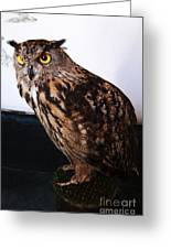 Yellow-eyed Owl Side Greeting Card