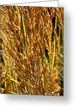 Yellow Feather Reed Grass Greeting Card