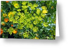 Yellow Firework Or Dill In Its Glory Greeting Card