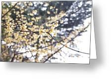 Yellow Flower 3 Greeting Card