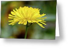 Yellow Flower And Bokeh Greeting Card