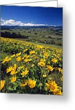 Yellow Flowers Blooming, Hood River Greeting Card