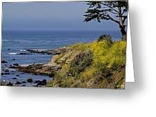Yellow Flowers On The Central California Coast Greeting Card
