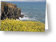 Yellow Flowers On The Northern California Coast Greeting Card