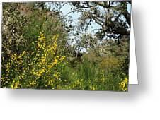 Yellow Flowers Under An Oak Greeting Card