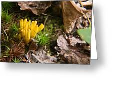 Yellow Fungus 1 Greeting Card