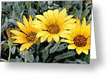 Yellow Gazanias Greeting Card