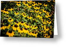 Yellow Golden Flowers 3 Greeting Card