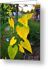 Yellow Heart Leaves  Photoart I Greeting Card