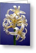 Yellow Hyacinth Greeting Card