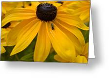 Yellow In Nature Greeting Card
