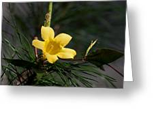 Yellow Jessamine Greeting Card