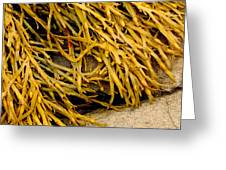 Yellow Kelp Greeting Card
