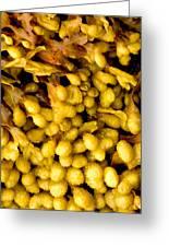 Yellow Kelp Pods Greeting Card