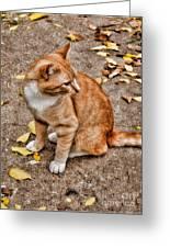 Yellow Kitty Greeting Card