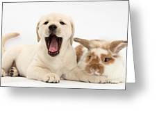 Yellow Lab Puppy With Rabbit Greeting Card by Mark Taylor