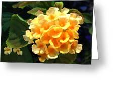 Yellow Lantana Greeting Card