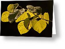 Yellow Leaves On A Tree Branch Greeting Card
