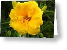 Yellow Lily - Oshun Greeting Card