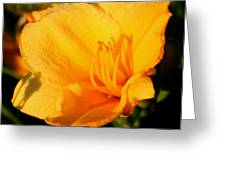 Yellow Lily2 Greeting Card