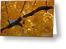 Yellow Maple Branch Greeting Card