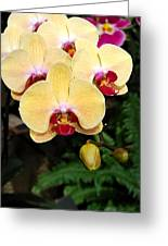 Yellow Moth Orchids Greeting Card