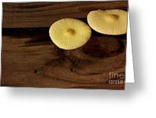 Yellow Mushrooms2 Greeting Card