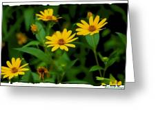 Yellow N Green Greeting Card